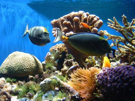 Coral reef gleaned from google.